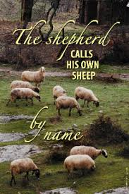 Jesus Knows His Sheep   Faithful Steward Ministries and FSM ...